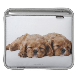 Two Cavalier King Charles Spaniel puppies iPad Sleeve