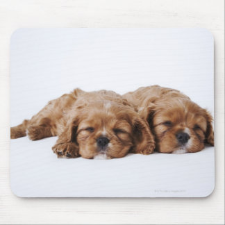 Two Cavalier King Charles Spaniel puppies Mouse Pad