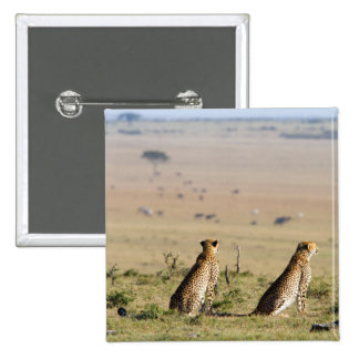 Two cheetahs on the look out button