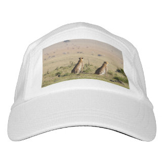 Two cheetahs on the look out hat