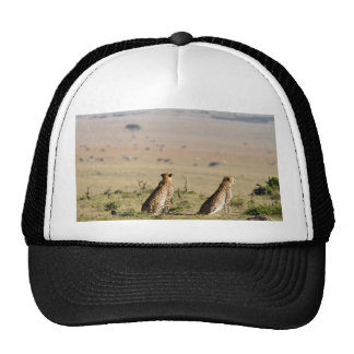 Two cheetahs on the look out trucker hat
