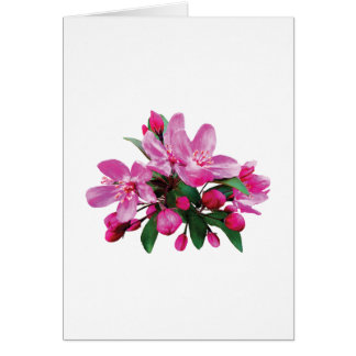 Two Cherry Blossoms and Buds Card