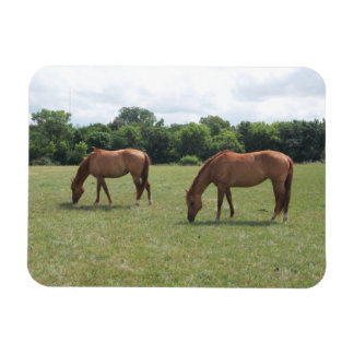Two Chestnut Horses Grazing in a pasture Magnet