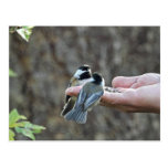 Two Chickadees on a Hand Post Card