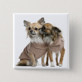 Two Chihuahuas dressed (2 years old) Button