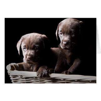 Two Chocolate Labrador Puppies Greeting Card