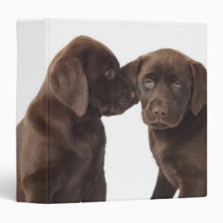 Two chocolate Labrador Retriever Puppies Binder