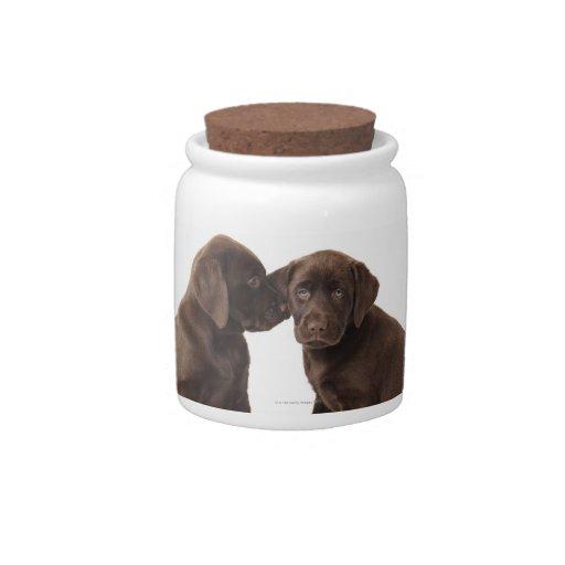 Two chocolate Labrador Retriever Puppies Candy Jar