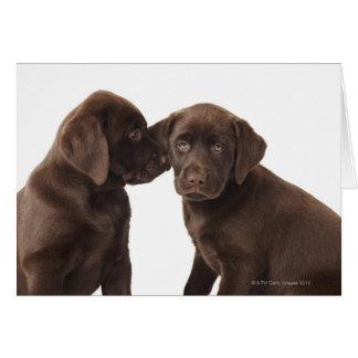 Two chocolate Labrador Retriever Puppies Card