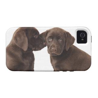 Two chocolate Labrador Retriever Puppies iPhone 4/4S Cases