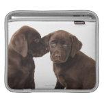 Two chocolate Labrador Retriever Puppies iPad Sleeves