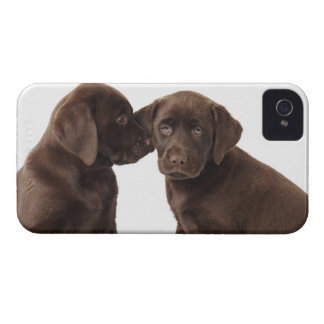 Two chocolate Labrador Retriever Puppies iPhone 4 Case-Mate Case