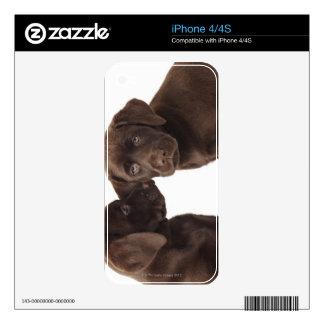 Two chocolate Labrador Retriever Puppies iPhone 4 Skins
