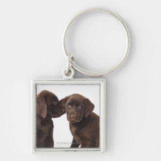 Two chocolate Labrador Retriever Puppies Keychain