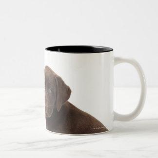 Two chocolate Labrador Retriever Puppies Two-Tone Coffee Mug