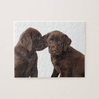 Two chocolate Labrador Retriever Puppies Puzzle