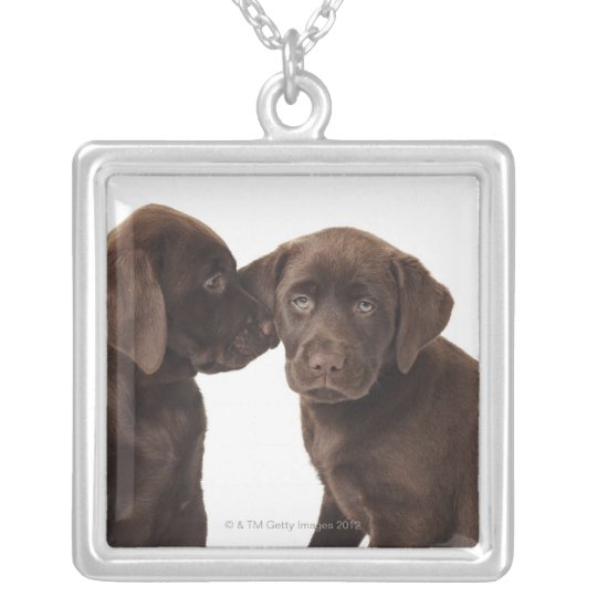Two chocolate Labrador Retriever Puppies Silver Plated Necklace