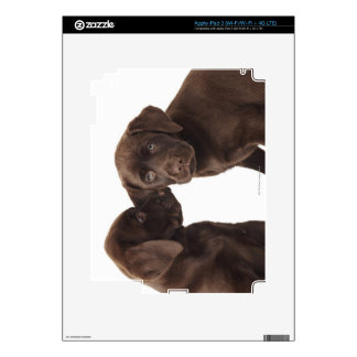 Two chocolate Labrador Retriever Puppies Decal For iPad 3