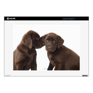 Two chocolate Labrador Retriever Puppies Skin For Laptop
