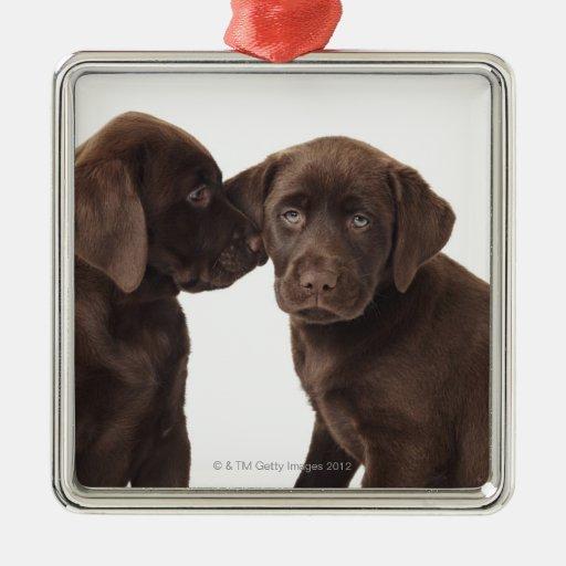 Two chocolate Labrador Retriever Puppies Square Metal Christmas Ornament
