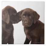 Two chocolate Labrador Retriever Puppies Large Square Tile