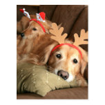 Two Christmas Holiday Golden Retrievers Post Cards