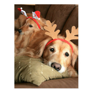 Two Christmas Holiday Golden Retrievers Postcard