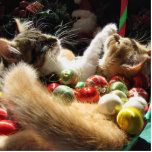 Two Christmas Kitty Cats, Kittens Together, Basket Photo Cut Out