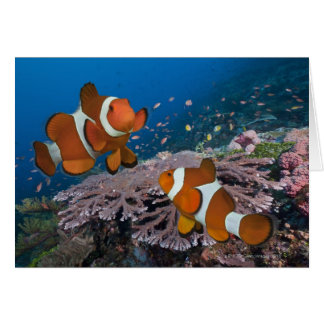 Two Clownfish Greeting Cards