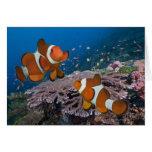 Two Clownfish Greeting Card