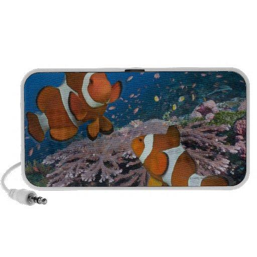 Two Clownfish Laptop Speakers