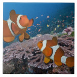 Two Clownfish Large Square Tile