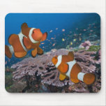 Two Clownfish Mouse Pad