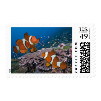 Two Clownfish Stamps