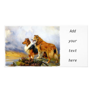 Two Collie Dogs above a Lake Card
