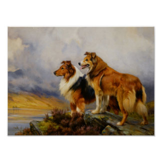 Two Collies Above A Lake Posters
