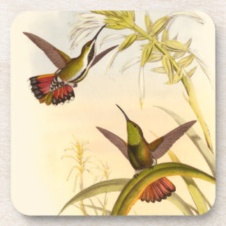 Two Colorful Hummingbirds Aiming for Same Flower Beverage Coaster