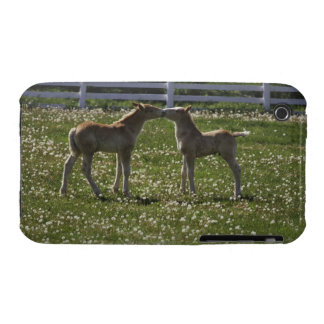 Two colts in field iPhone 3 Case-Mate case