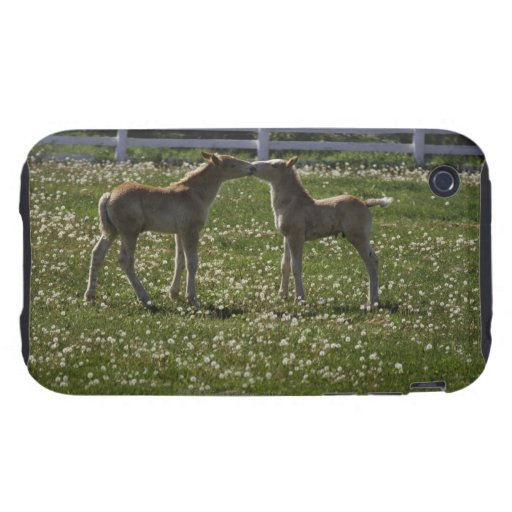 Two colts in field iPhone 3 tough cases