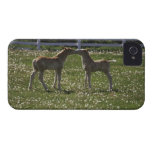 Two colts in field iPhone 4 cover