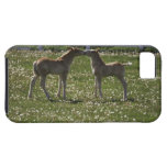 Two colts in field iPhone 5 case
