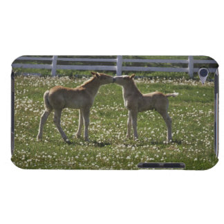 Two colts in field iPod Case-Mate cases