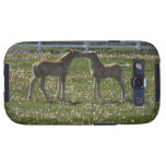 Two colts in field samsung galaxy SIII case