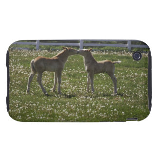 Two colts in field tough iPhone 3 case