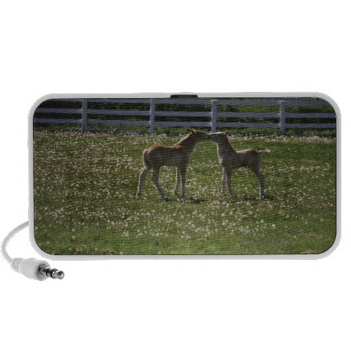 Two colts in field travelling speaker