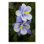 Two Columbines Poster