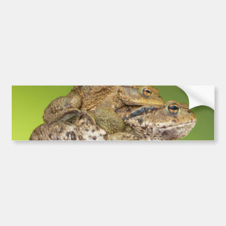 Two Common Toads Bufo Bufo Together Car Bumper Sticker
