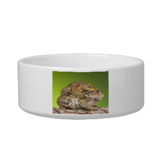 Two Common Toads Bufo Bufo Together Pet Food Bowl