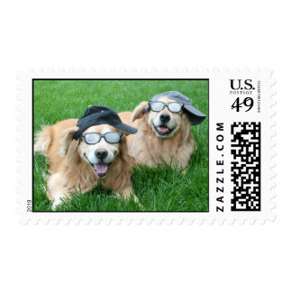 Two Cool Golden Retrievers in Hats and Sunglasses Postage