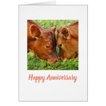 Two cows Anniversary